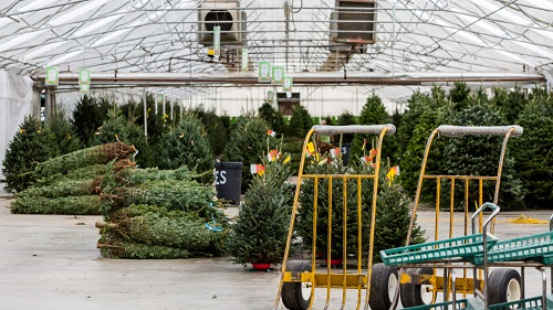21 Tips for Starting & Running a Successful Christmas Tree Farm